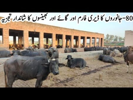Dairy Farming Business Tips 2020 | Dairy Farming Business Feasibility | Village Info