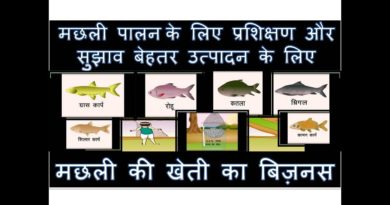 Tips And Training For Fish Farming Business In India In Hindi For Good Production