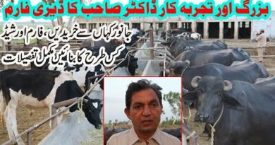 Doctor Shoukat Diary Farm in Pakistan || Diary Farming Business in Urdu || Farming Tips in Urdu